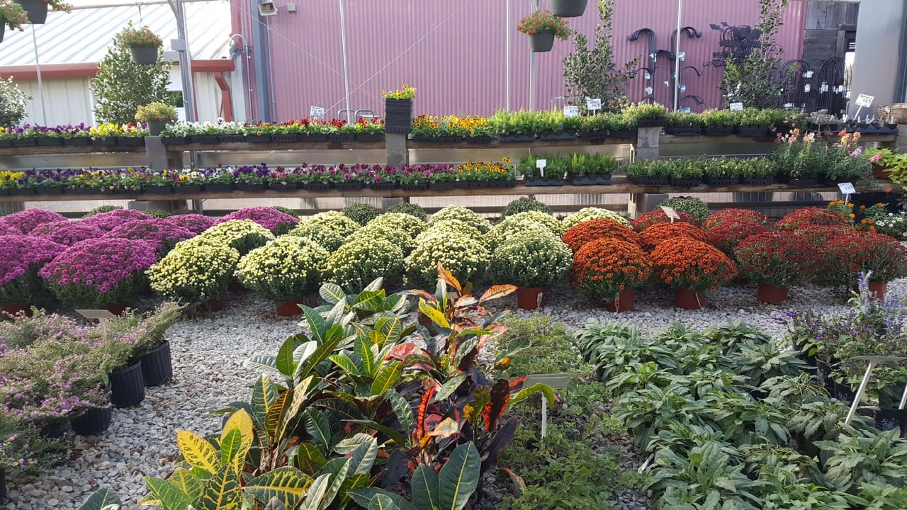 landscaping-companies-in-Corsicana-TX