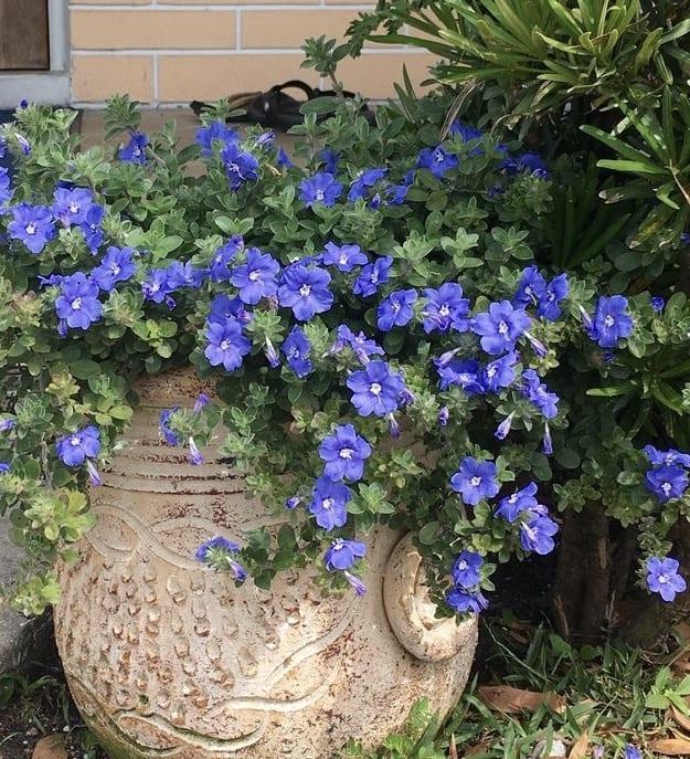 plant-nursery-in-Ennis-TX