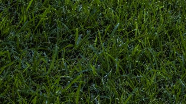 bermuda-grass-installation-in-Ennis-TX