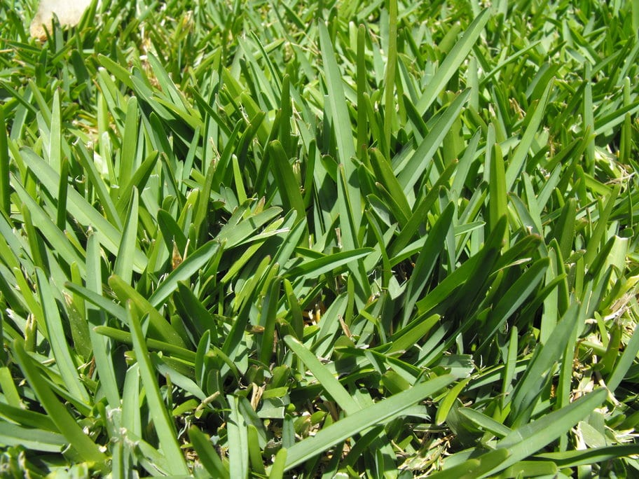 st-augustine-grass-installation-ennis-texas