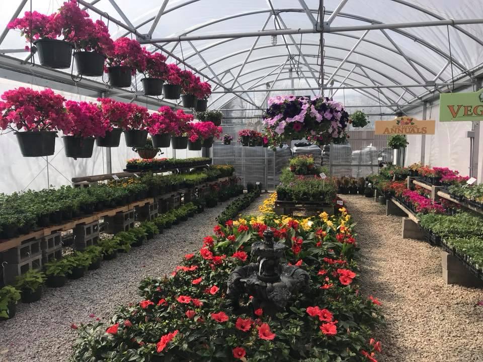 Annual Plants in Ennis, Texas