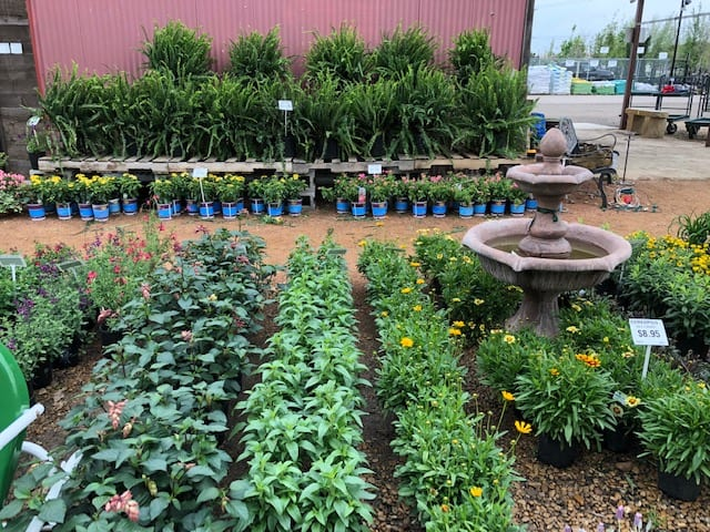 Wide Selection of Perennials in Ennis, Texas
