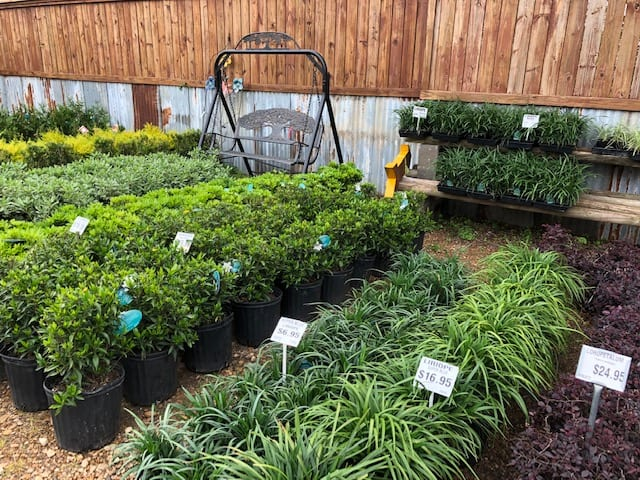 Extensive Selection of Shrubs in Ennis, Texas
