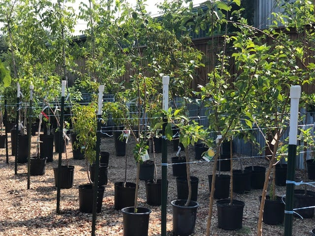 Fruit Trees Supplier in Ennis, Texas