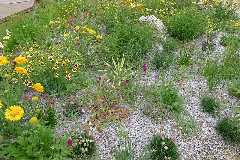 Ennis, Texas Xeriscaping Design Services