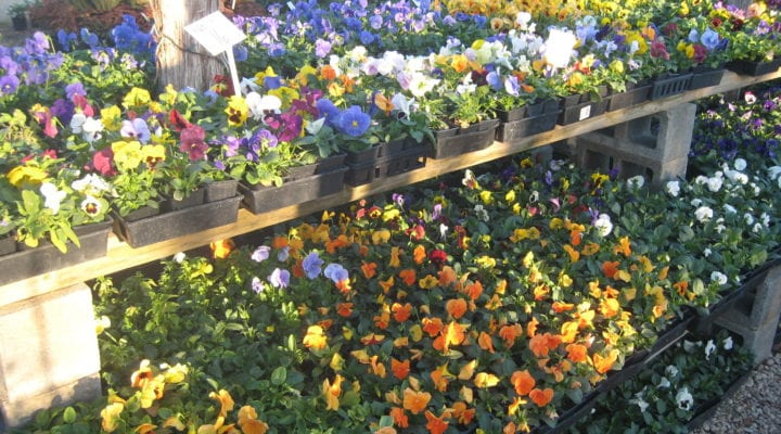 Prepare Your Landscape for Spring in Texas